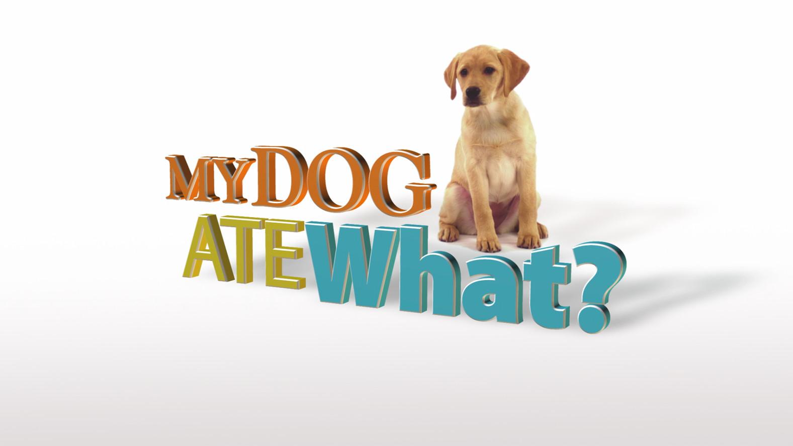 my_dog_ate