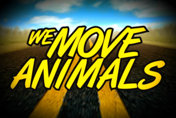 we_move_animals